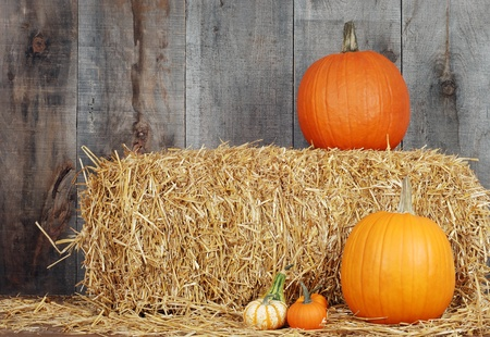 gourds: pumpkins and gourds on straw