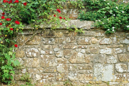old english: roses on a stone wall Stock Photo