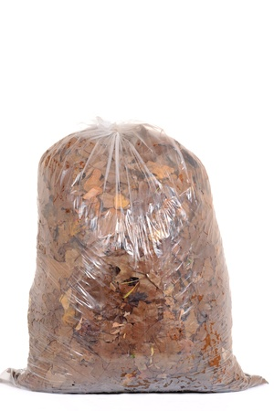 recycle bag: Bag of fall leaves for recycling Stock Photo