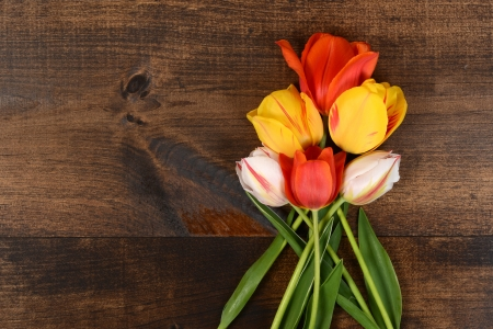 colorful tulips on wood photo