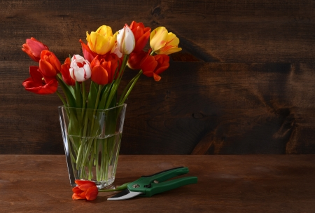 clippers: bouquet of tulips with clippers
