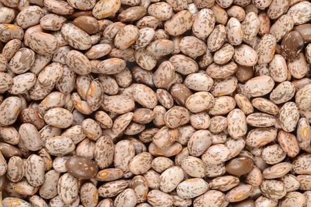 pinto bean: Pinto bean