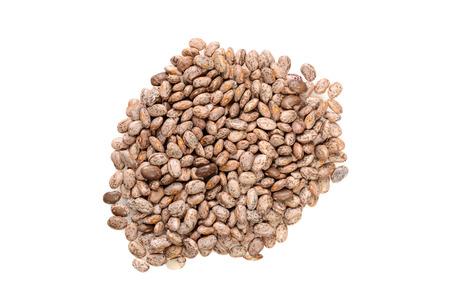 pinto bean: top view pinto bean