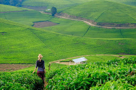 Caucasian woman walking through tea plantation field in Rwanda, Africa