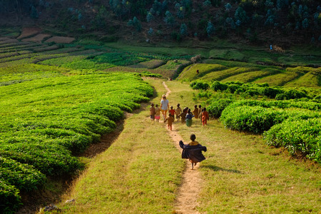 Caucasian tourist holding hands with African children walking down a hill in a tea plantation on a dusty path. Editorial