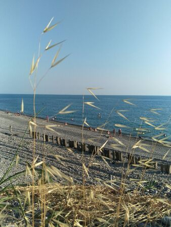 blurred spikelets of coastal dry grass, in the background the wild beach of the black sea coast, small figures of tourists, water activities and sports. the atmosphere of relaxation and fun Reklamní fotografie