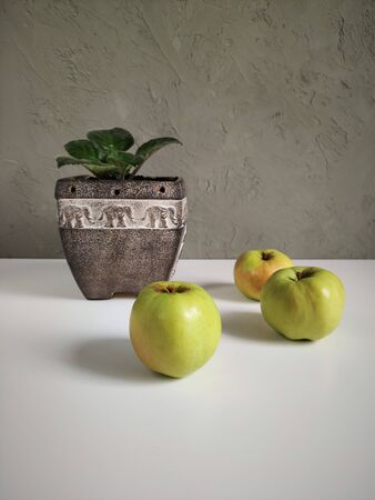 Apple green and indoor plant in brown ceramic planter, three green fruit with violet in a clay pot on a background of gray wall