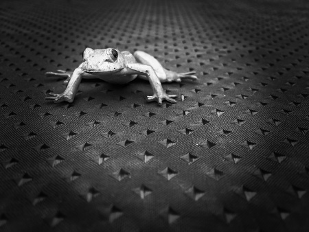 shadowed: Frog crouched to jump on tablecloth