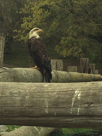 The eagle sits   Imagens