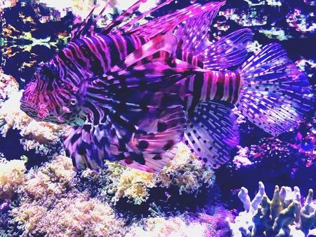 exotic fish: Pesci esotici di meraviglia