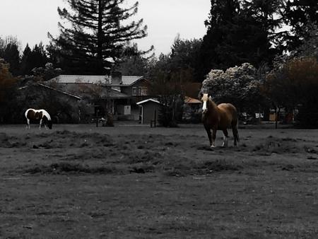 Chevaux sur le ranch Banque d'images - 43180119
