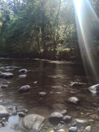 Morning Rays on the stream