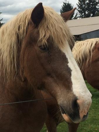 Majestic horses Zdjęcie Seryjne