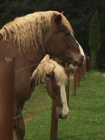 eye: Majestic horses Stock Photo