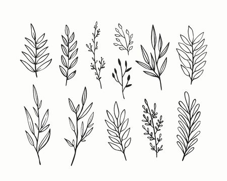 Vector branches and leaves. Hand drawn floral elements. Vintage botanical illustrations. 矢量图像