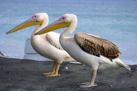 Two pelicans. Stock Photo - 223853