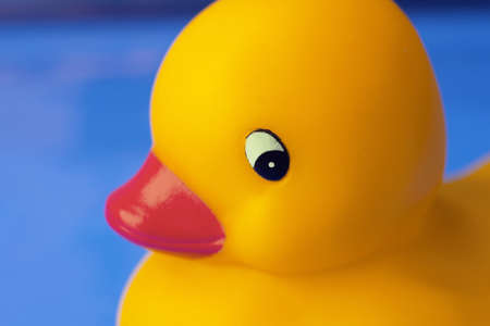 duckie: Close-up of toy duck