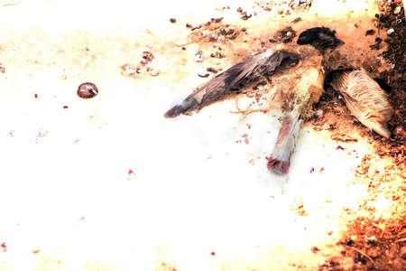 났습니다: Dead Bird found on balcony.