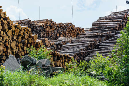 A pile of logs are stacked for shipping by rail. lumber from forest trees.