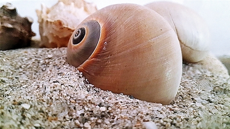 molluscs: snails in the sand Stock Photo