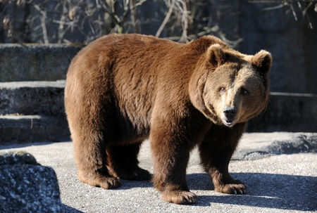 brown bear: Bear in a croft in the middle of the big city. Stock Photo