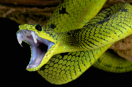 mouths: Snake attack