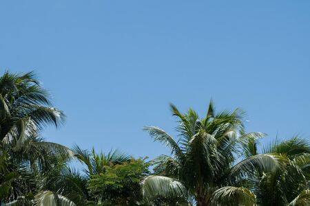 Beautiful clear blue sky with palm trees below on a sunny day in the Caribbean