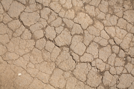 trampled: The dry, cracked, trampled down land  Texture  Stock Photo