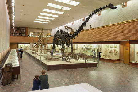 MOSCOW, RUSSIA - AUGUST 20, 2017: Skeletons of dinosaurs at Paleontological Museum. Large dark skeleton is skeleton of diplodocus.