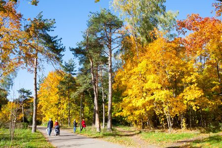 MOSCOW, RUSSIA - OCTOBER 11, 2018: Yellow trees, people and alley in Kuzminki Park on sunny, autumn day. Kuzminki Park is located in South-Eastern administrative district of Moscow.