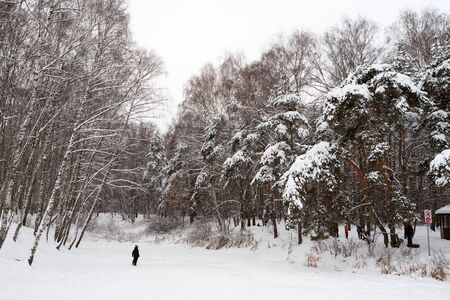 MOSCOW, RUSSIA - DECEMBER 6, 2019: Trees covered with snow in Lianozovo Nursery park in Leskova Street on a winter day. Leskov Street is located in the Bibirevo district in the north of Moscow.