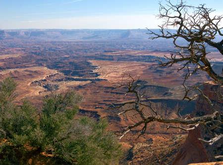 Beautiful vista in Canyonlands National Park in Utah