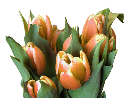 A bunch of spring tulips