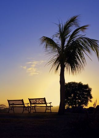 The warm glow of a tropical sunset silhouettes a palm tree and benches
