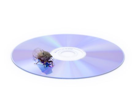 A Woodland Cicada, Platypedia species, on a CD isolated on a white background photo