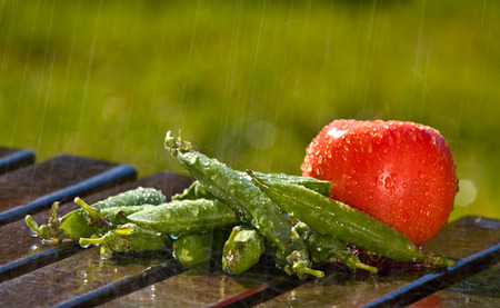 Pile of pea pods with a tomato in the rain (2620)