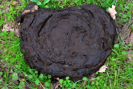 feces: Enormous cow pie in green spring grass Stock Photo