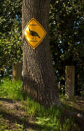 xing: Turkey crossing sign hung on a tree