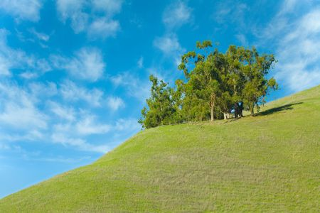 Outcropping of Trees on a Hill of Green Grass with Blue Sky
