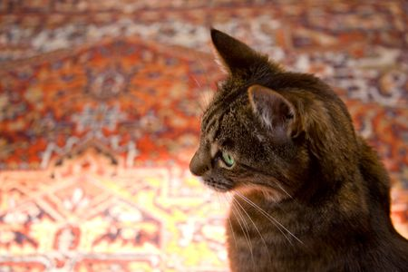 oriental rug: Cat Staring into Space on Oriental Carpet