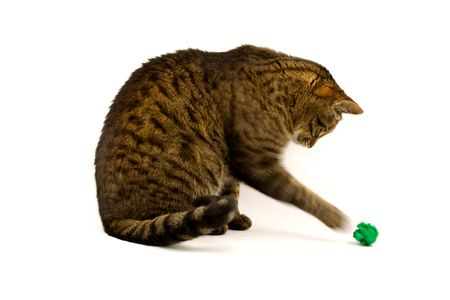 adoration: Playful Tabby Cat with Green Paper Toy