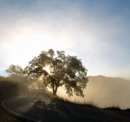 Sunbeams in the Mist on a Winding Country Road Stock Photo