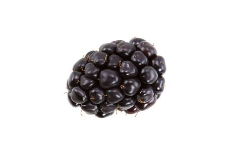 A Plump Blackberry isolated on White Background Reklamní fotografie