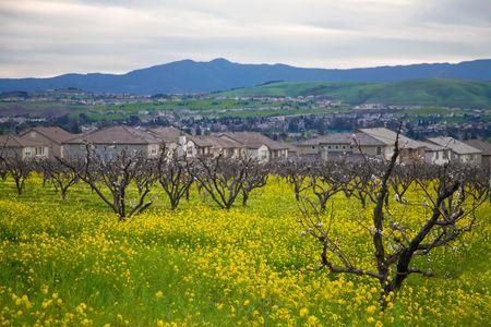Suburban Housing Developments Crowd Out Orchards in San Jose, Callifornia