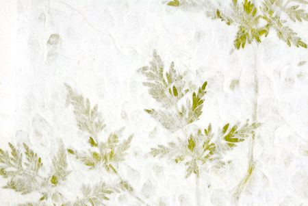 Frilly Plant Leaves Pressed into Handmade Paper