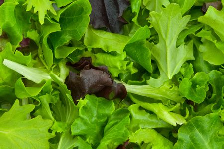 A Pile of Fresh, Mixed Spring Salad Greens