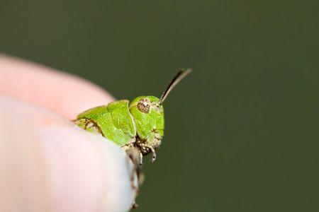 grip: Grasping a Green Grasshopper in Grimy Grip