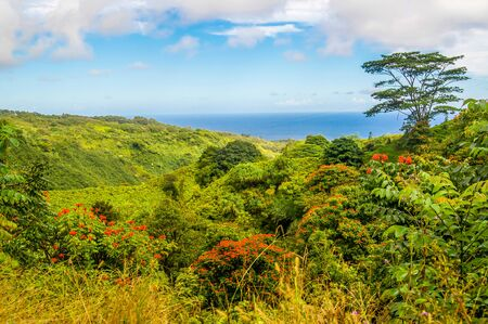 The landscape along the Road to Hana in Maui is doted with beautiful flowers and tropical vegetation in the Hawaiian Islands. 免版税图像