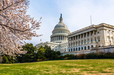 Spring and cherry blossoms on Capitol Hill in Washington D.C. Archivio Fotografico