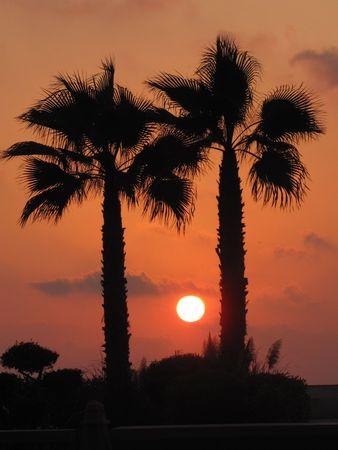 alexandria egypt: Palm trees on San Stefano, Alexandria, Egypt Stock Photo